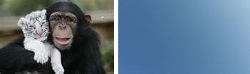 monkey and sky.jpg